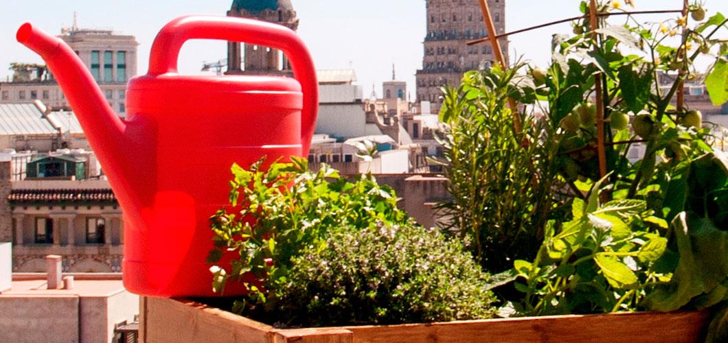 Cómo Hacer Un Huerto Urbano Ecológico En Casa Servei Estació