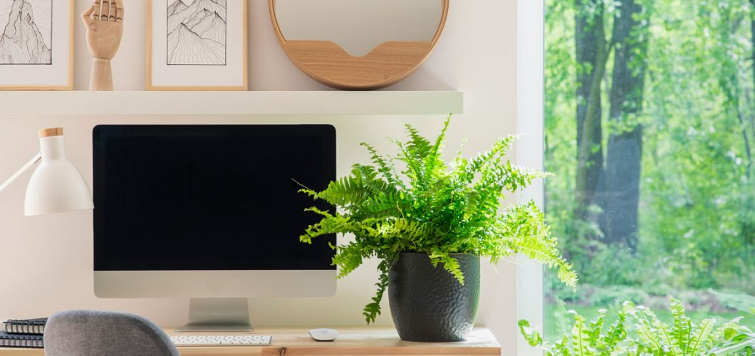 Salón decorado con plantas - Servei Estació