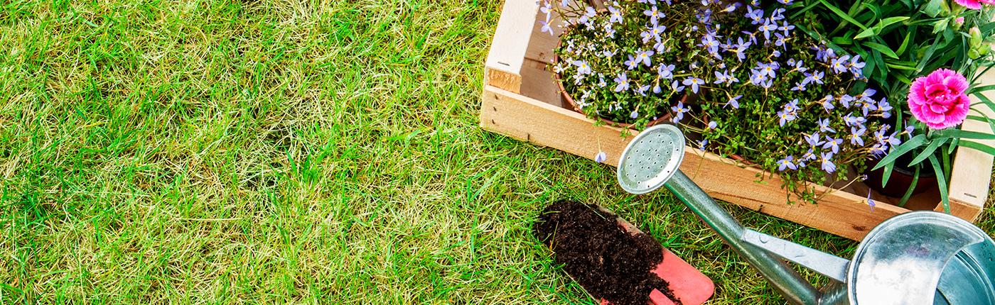 como-proteger-las-plantas-del-sol-y-el-calor-este-verano
