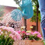 ¿Cómo regar las plantas cuando estás de vacaciones? - Servei Estació